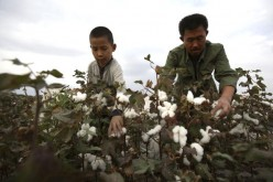 Xinjiang is China's largest producer of cotton.